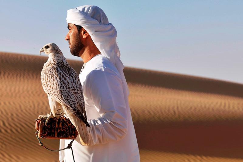 La Fauconnerie, art ancestral des Arabes érigé en sport national dans la péninsule arabique