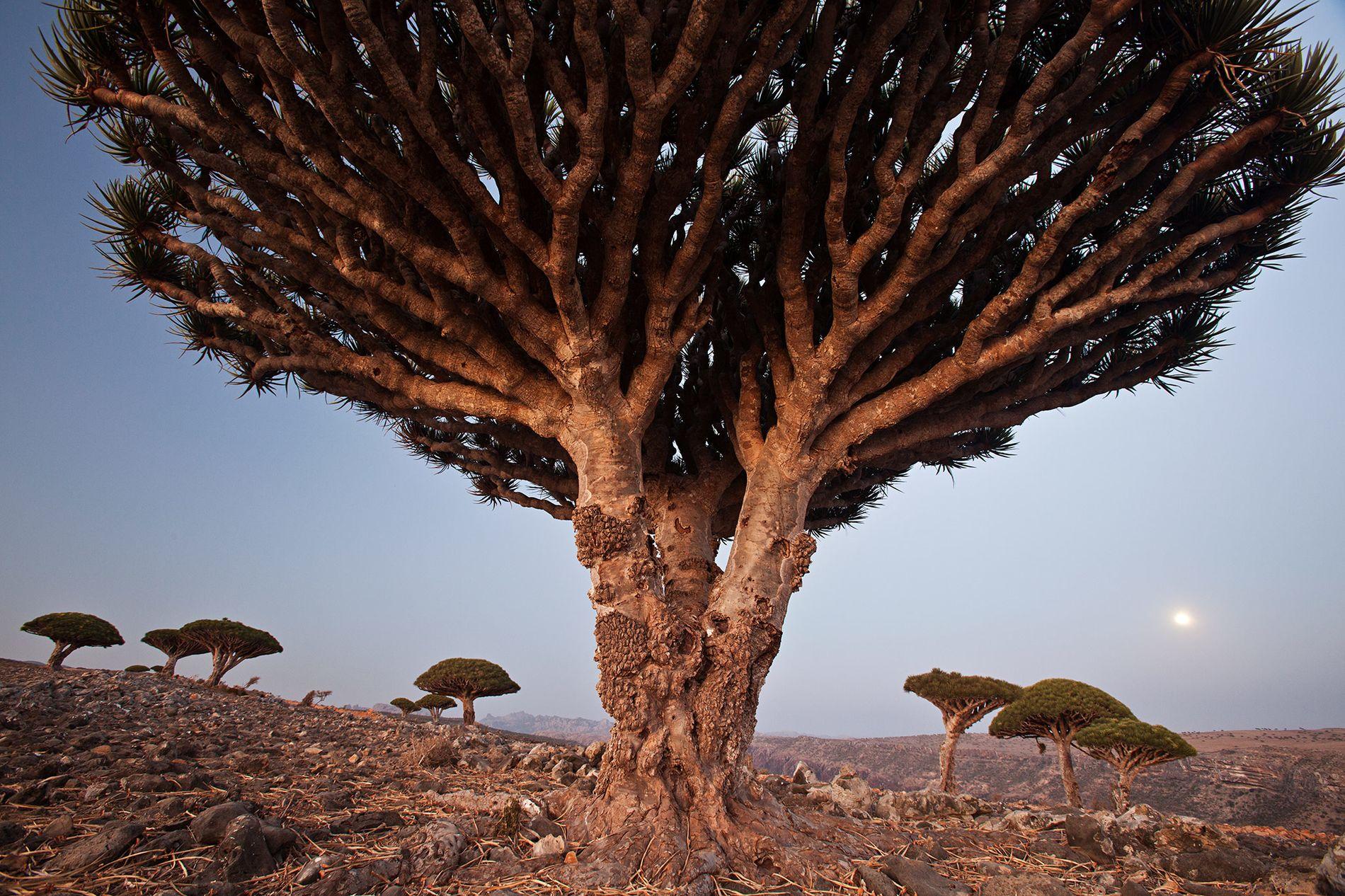 Socotra : une île mystérieuse