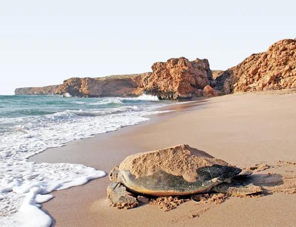 Hard Shelled, Hard Future? The Turtle Sanctuary at Ras al-Jinz